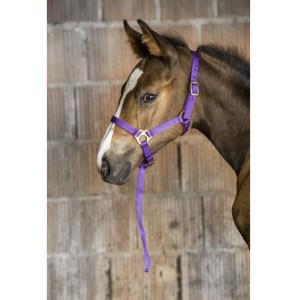 Licol nylon foal/poulain